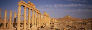 A View of the Ruins of the Palmyra Great Colonnade by Richard Nowitz