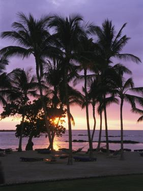 Coconut Trees Silhouetted on Mauna Lani Bay Hotels Beach at Sunset by Richard Nowitz