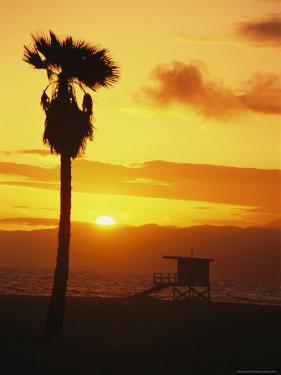 Palm Tree Silhouetted on Venice Beach at Sunset by Richard Nowitz