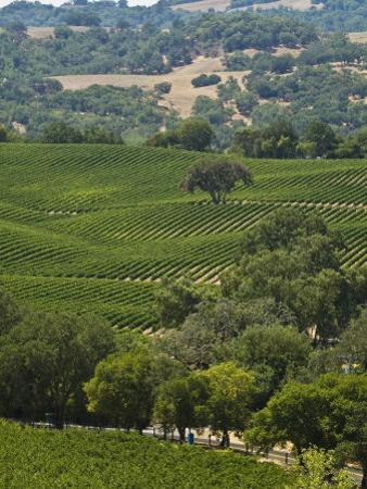 Vineyard in the Anderson Valley by Richard Nowitz