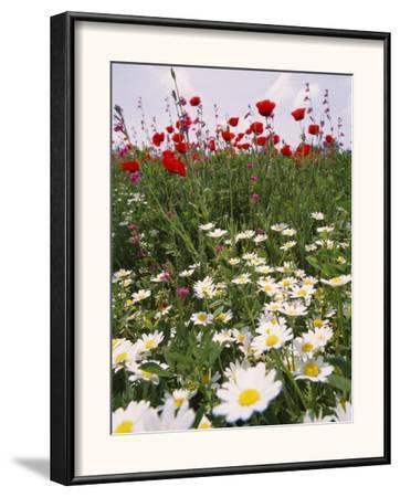 Wildflower Farming on a Kibbutz in Springtime by Richard Nowitz