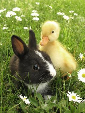 Rabbit Bunny And Duckling Best Friends by Richard Peterson