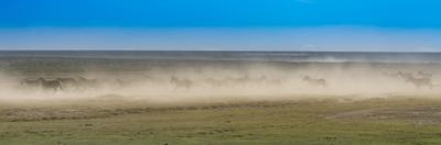 A herd of zebras running over a very dry savanna creating a dust storm. by Richard Seeley