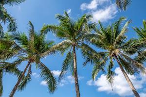 Palawan Palm Trees I by Richard Silver