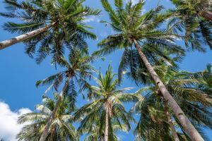 Palawan Palm Trees II by Richard Silver