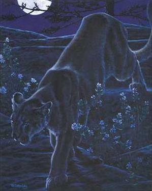 Night Walk by Richard Stanley