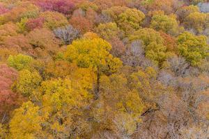 Aerial view of fall color trees Stephen A. Forbes State Park. Marion County, Illinois, USA. by Richard & Susan Day
