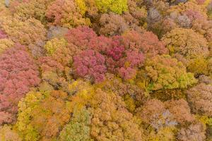 Aerial view of fall color trees, Stephen A. Forbes State Park, Marion County, Illinois. by Richard & Susan Day