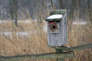 Bird, nest box with holiday wreath in winter, Marion, Illinois, USA. by Richard & Susan Day