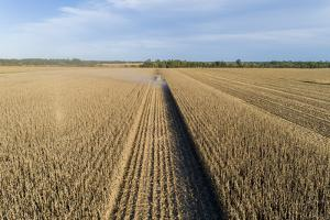 Harvesting corn in fall, Marion County, Illinois. by Richard & Susan Day
