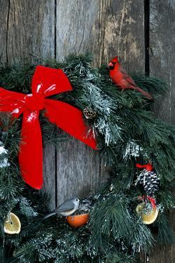 Northern Cardinal and Tufted Titmouse on wreath made for birds on barn door in winter, Illinois by Richard & Susan Day