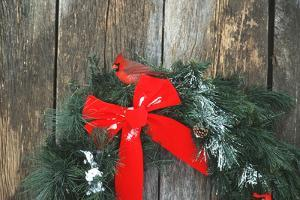 Northern Cardinal male on holiday wreath made for birds on barn door, Marion County, Illinois by Richard & Susan Day