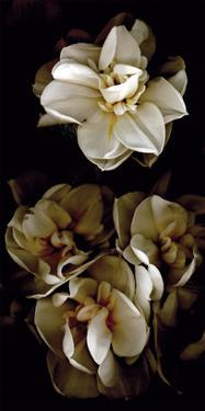 White Flowers Delight II by Richard Sutton