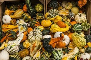 Pumpkins, Gouds and Winter Squash for Sale by Richard T. Nowitz