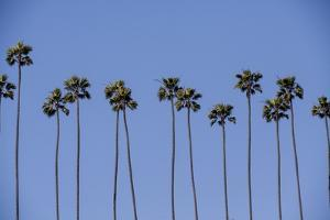 Row of Palm Trees by Richard T. Nowitz