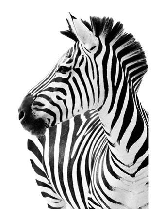 Richard The Zebra