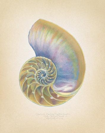 Nautilus Cross Section by Richard Van Genderen