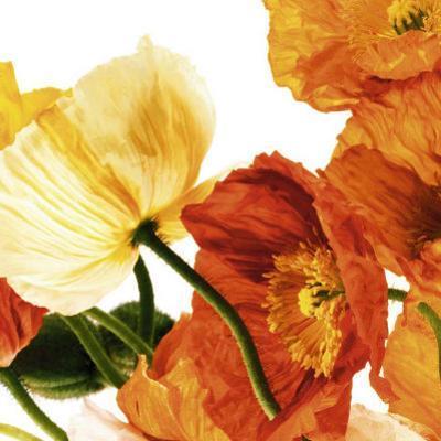 Poppies III by Richard Weinstein