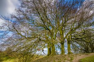 A grove of trees at Avebury, UK, a major Neolithic and medieval site. by Richard Wright