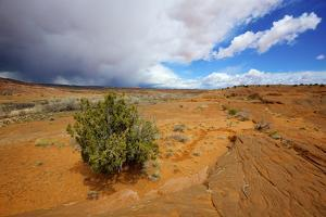 Hole in the Rock Road Near Escalante Utah Offers Many Scenic Spots by Richard Wright