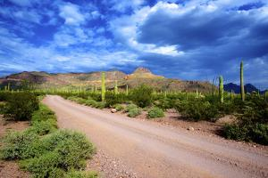 Organ Pipe Cactus National Monument, Ajo Mountain Drive in the Desert by Richard Wright