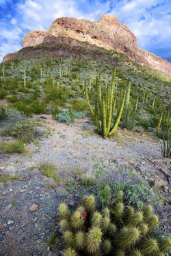 Organ Pipe Cactus NM, Ajo Mountain Drive Winds Through the Desert by Richard Wright
