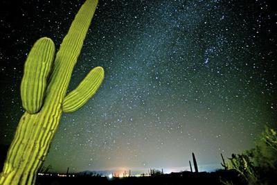 Stary Sky with Saguaro Cactus over Organ Pipe Cactus Nm, Arizona