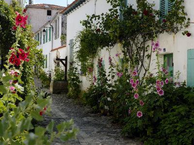 Hollyhocks Lining a Street with a Well, La Flotte, Ile De Re, Charente-Maritime, France, Europe