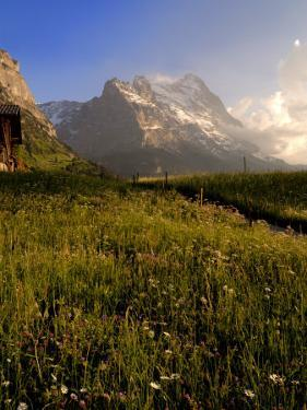 Spring Alpine Flower Meadow and Mountains, Grindelwald, Bern, Switzerland, Europe by Richardson Peter