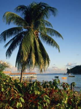 Jetty and Palm Tree, Villa Bay, Young Island, St. Vincent, Windward Islands, West Indies, Caribbean by Richardson Rolf