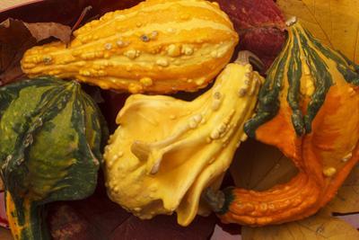Usa, Oregon, Keizer, gourds. by Rick A Brown