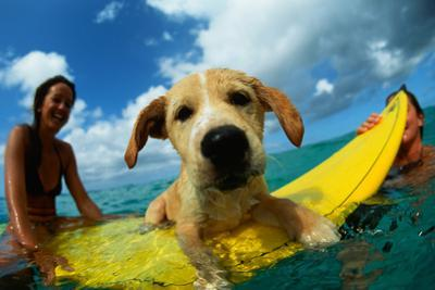 Puppy Riding on Surfboard by Rick Doyle