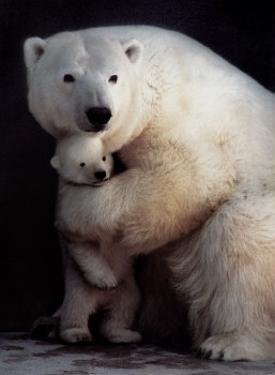 Bear Hug by Rick Egan