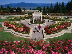 Couple Walking Through University of British Columbia Rose Garden, Vancouver, Canada by Rick Gerharter