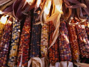Detail of Drying Coloured Corn at Roadside Market Near Mitchell, Mitchell, USA by Rick Gerharter