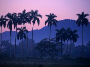 Palm Trees at Yumuri Valley at Sunset, Matanzas, Cuba by Rick Gerharter