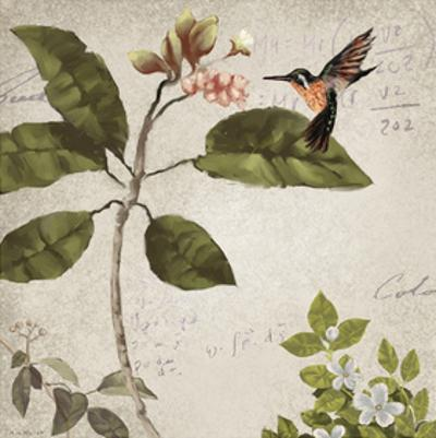 Birds by Rick Novak