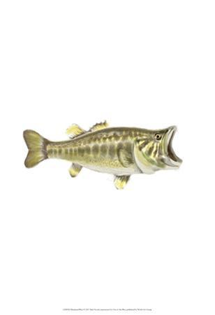 Illustrated Bass