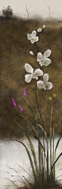 Orchid II by Rick Novak