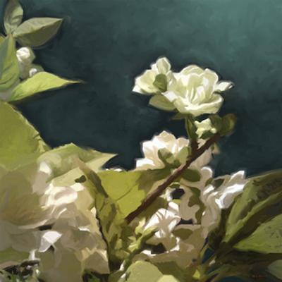 White Roses II by Rick Novak
