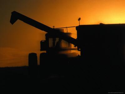 Harvesting Grain at Sunset, Canada