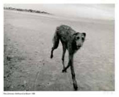 Wolfhound on Beach by Rick Zolkower
