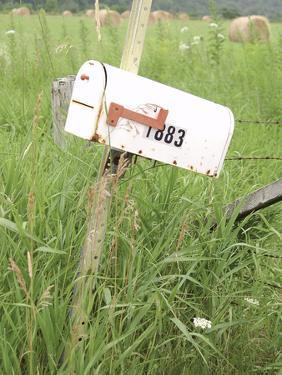 Rickety Old White Rural Mailbox
