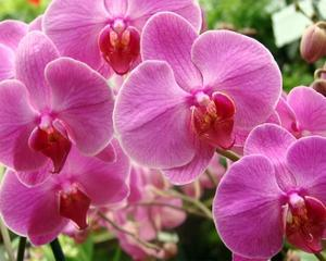 A Orchids I by Ricki Mountain