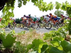 Riders are Seen Through Vineyards as the Pack Pedals Outside Beziers
