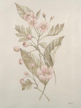 Botanicals IV by Rikki Drotar