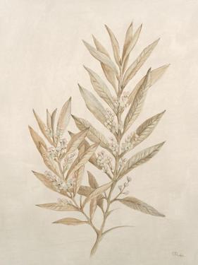 Botanicals VIII by Rikki Drotar