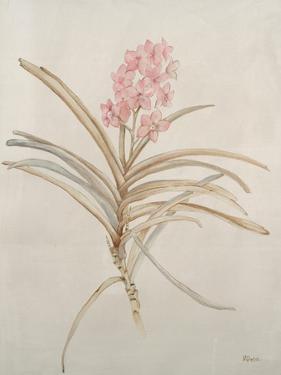 Botanicals X by Rikki Drotar