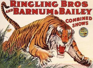 Ringling Brothers and Barnum Bailey Circus: Tiger