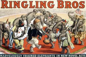 Ringling Brothers Circus: Elephant